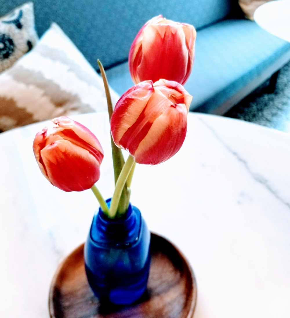 tulips for valentine's day gift ideas